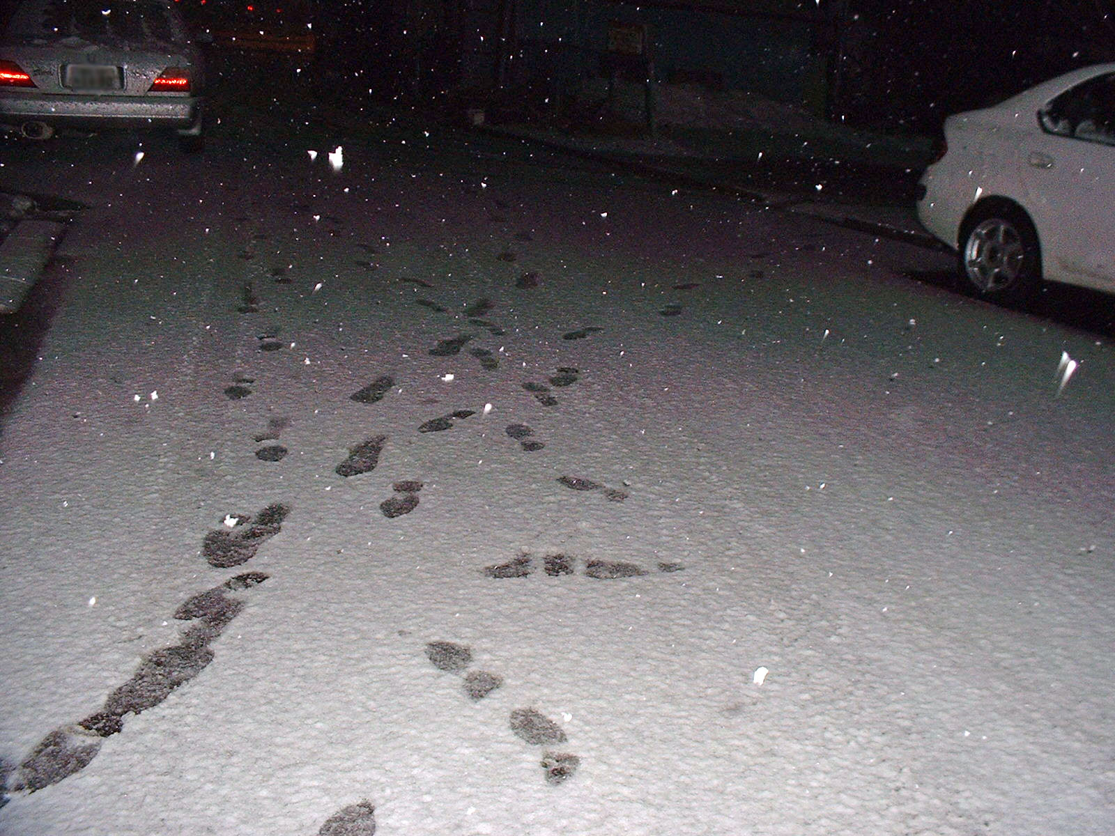 最後の雪?