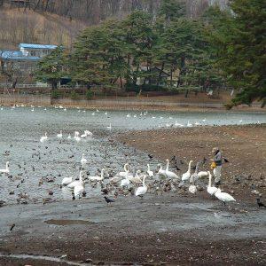 2002年12月トップ画像 02 白鳥おじさん