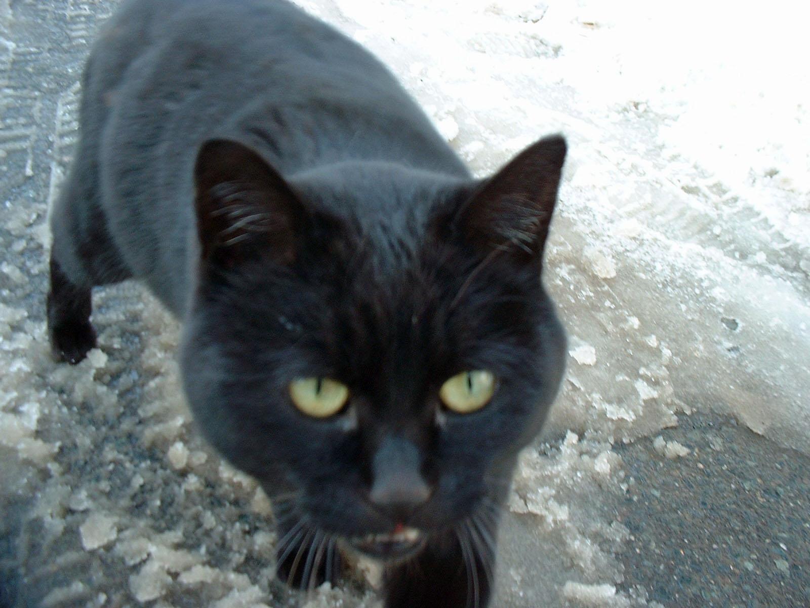 人懐っこい黒猫