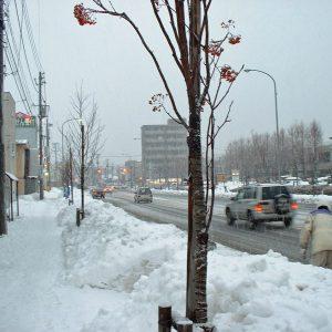 冬の街路樹