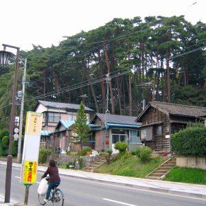 家の後ろにそびえ立つ林