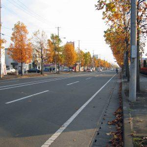 紅葉の街路樹は続く