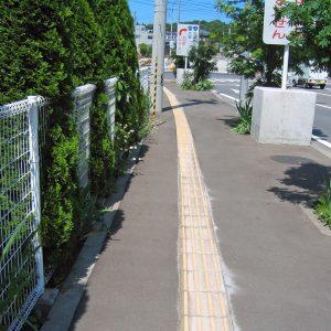 柵からむぎゅーっとはみ出た枝葉