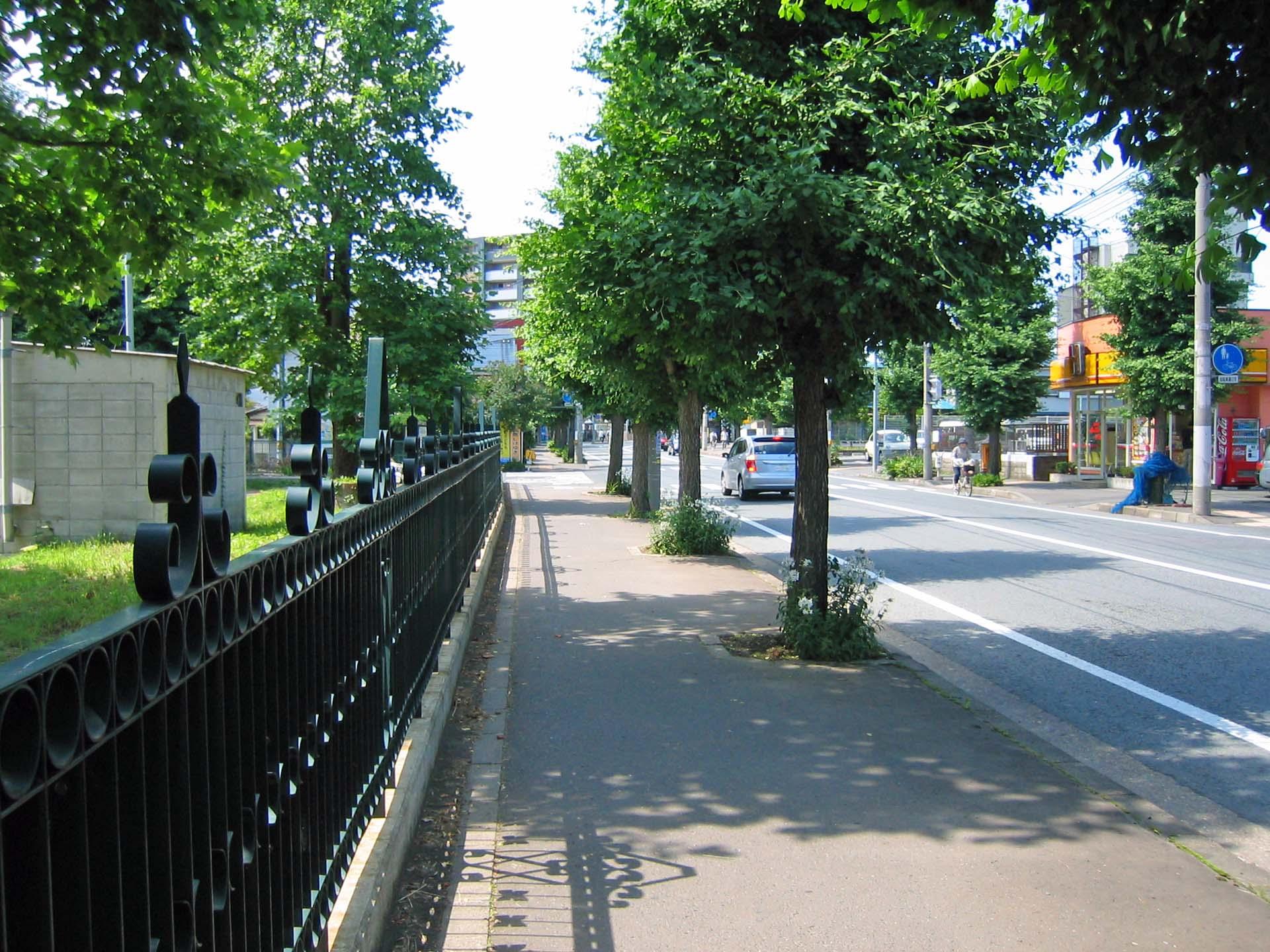 青々とした街路樹