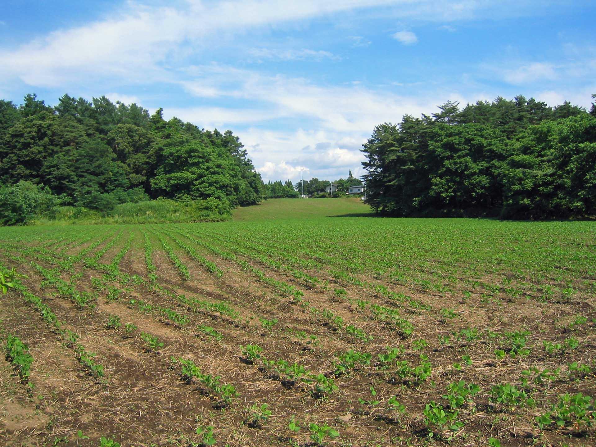 畑の緑と空の青