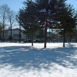2002年02月トップ画像 01  雪上の木陰