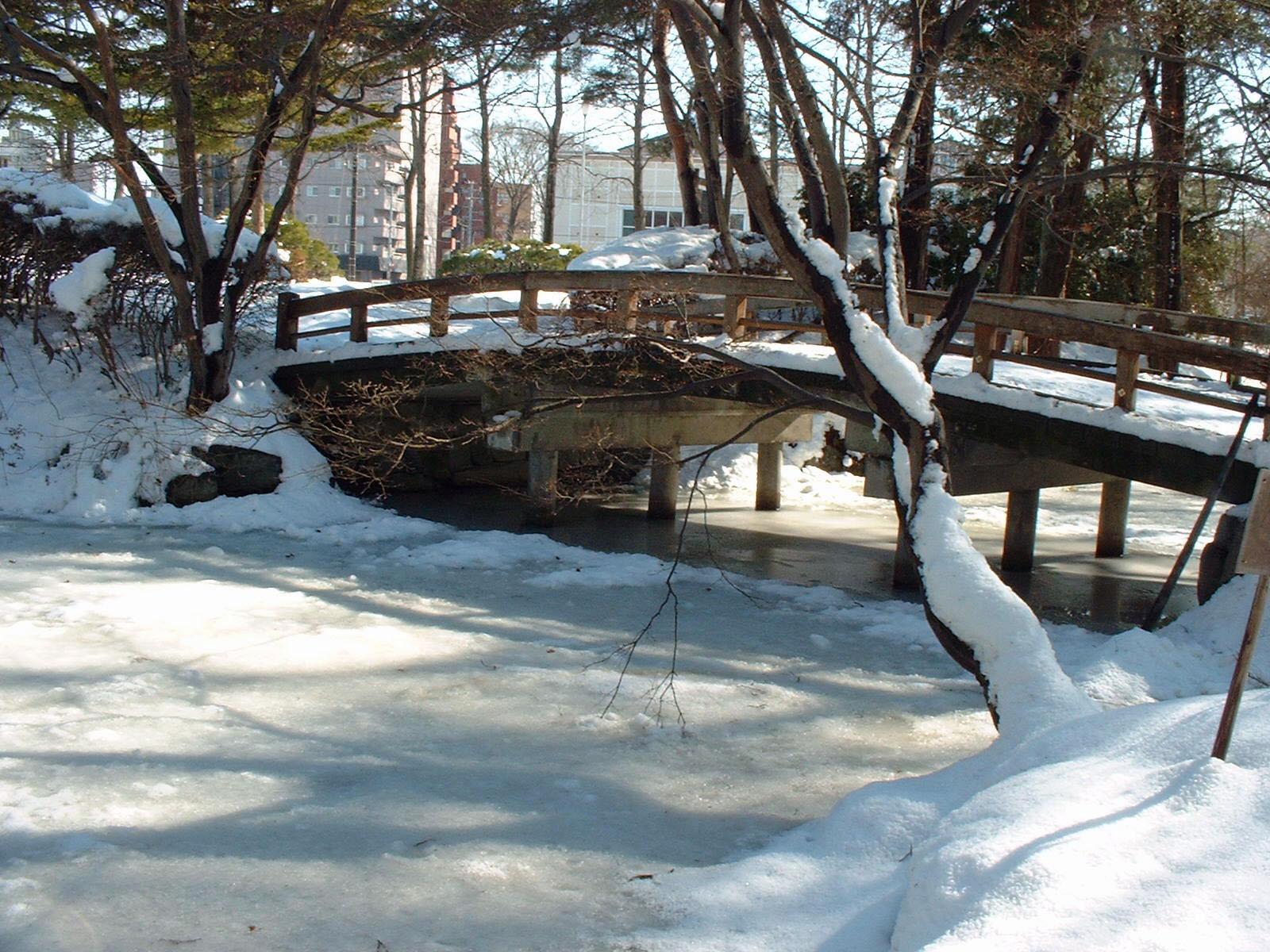 連日の寒さ・雪で氷が張ってます